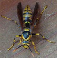 Bee3.jpg